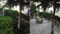 Pielęgnacja i wycinka drzew i krzewów