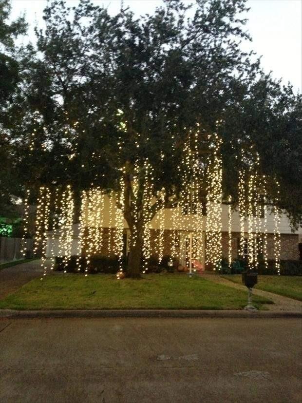 How To Put Double String Lights On A Christmas Tree : swi?teczne projektowanie i oswietlenie ogrodu - Otoczenie budynku - Sztuka Krajobrazu