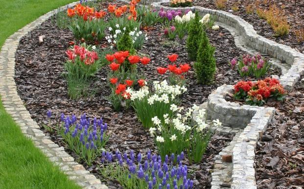 Katalog Roślin Narcyz Katalog Roślin Sztuka Krajobrazu