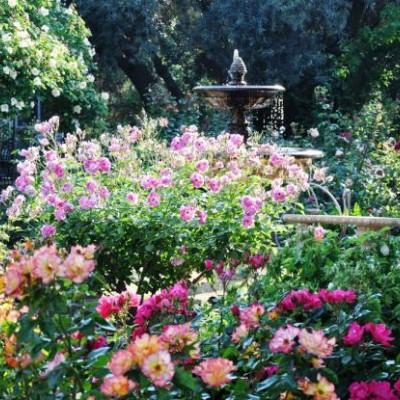 Ogród różany projekt
